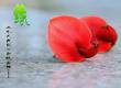 鲜花寓意:各种花的花语大全带鲜花图片