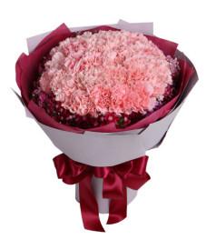 衷心的問候--粉色康乃馨33枝