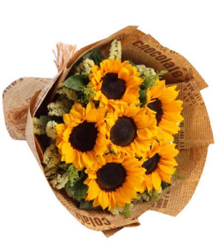 沉默的爱--向日葵6枝