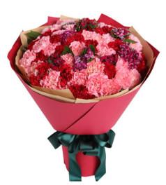 感恩--红色、粉色康乃馨共66枝