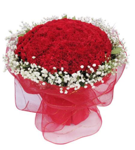 一片冰心在玉壶--红色康乃馨99枝