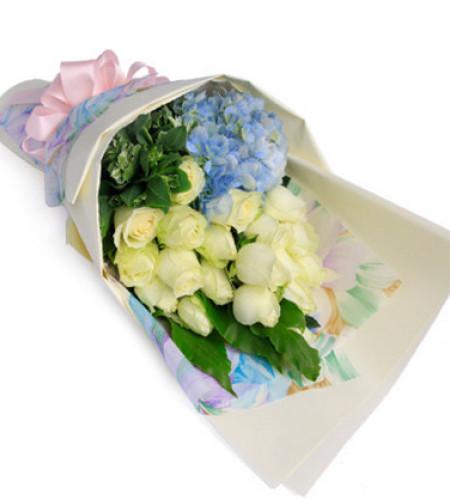 娇艳如你--雪山白玫瑰19枝,蓝色绣球1枝
