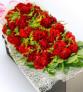 呵护--19枝红色康乃馨