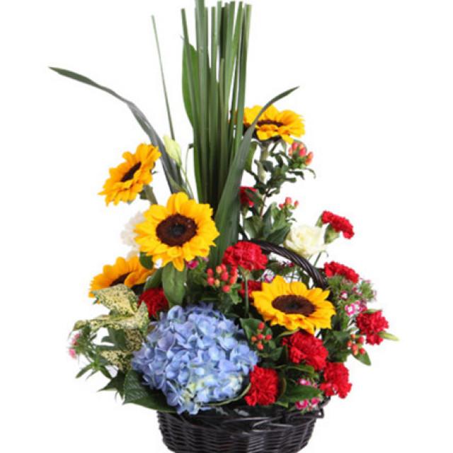 心中的微笑--向日葵5枝,红色康乃馨11枝,蓝色绣球1枝
