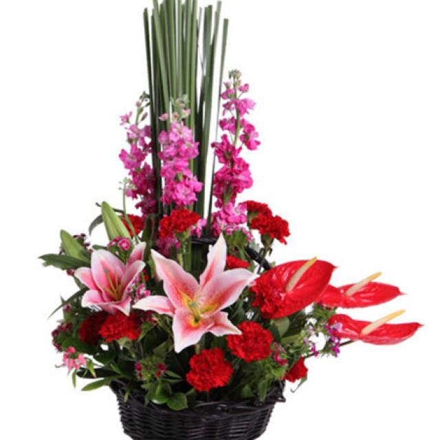 佳人笑--粉色香水百合2枝,红掌3枝,深粉色紫罗兰3枝,红色康乃馨11枝