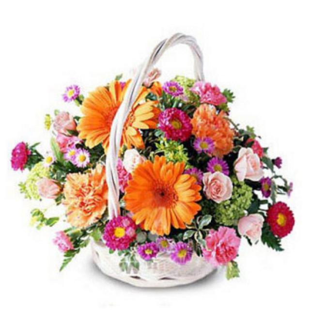 仰望阳光--粉色玫瑰5枝,橙色太阳菊6枝,粉色,紫红色康乃馨各10 枝,