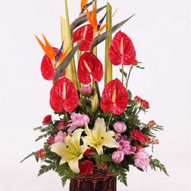 顺心顺意--生日、祝福、友情、婚庆、商务、探望、新年春节、其他节庆场合
