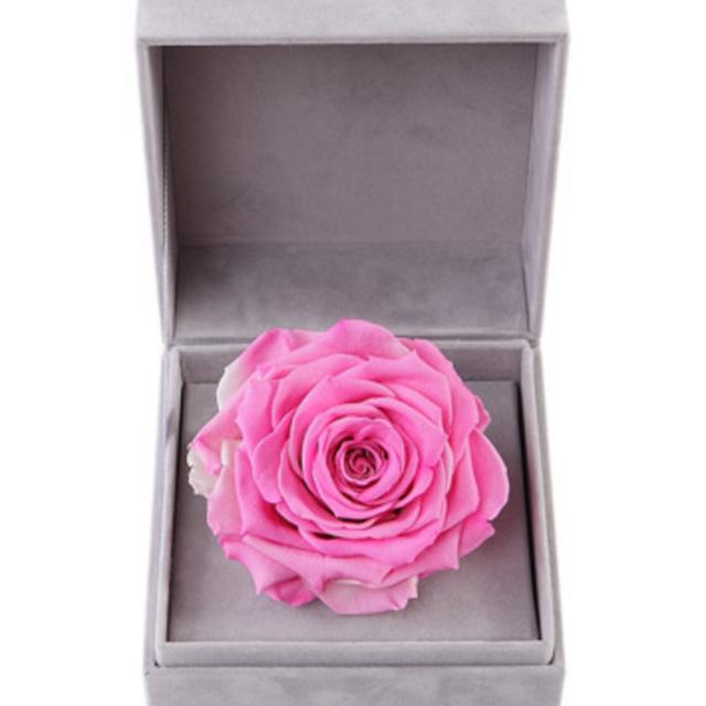 浪漫主义--粉色永生玫瑰:厄瓜多尔进口巨型玫瑰
