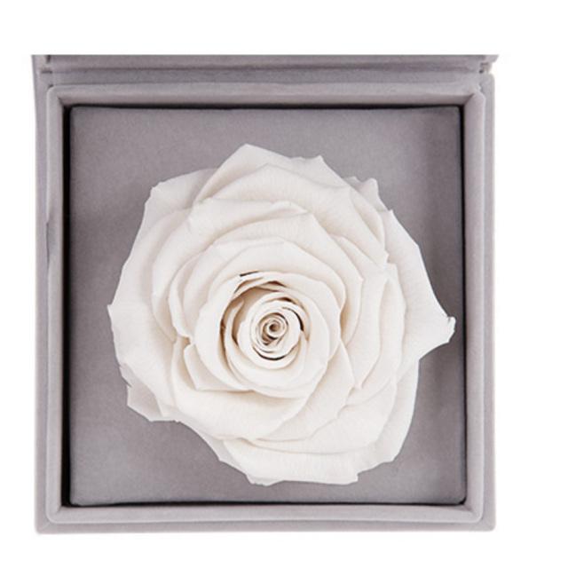 放飞--白色永生玫瑰:厄瓜多尔进口巨型玫瑰